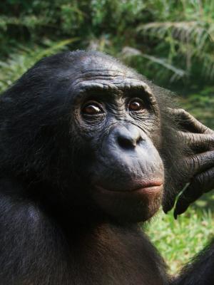 1-apesgetemoti