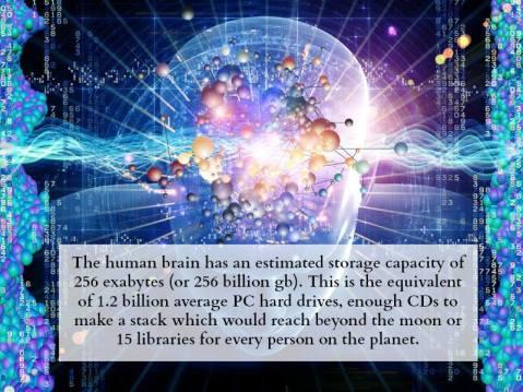 humanbraincapacity