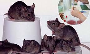 mouseclonejapan