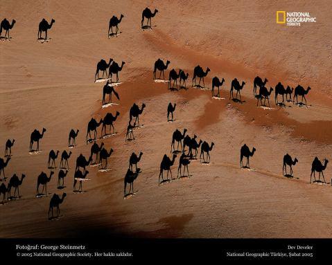 camels-national-geographic