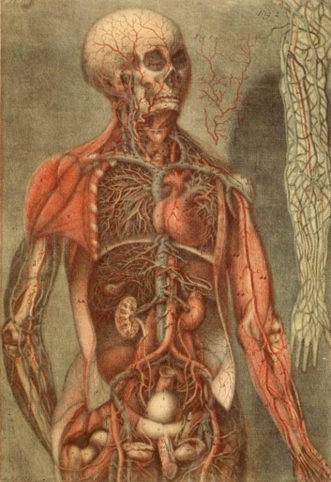 anatomie des parties de la génération de l'homme et de la femme