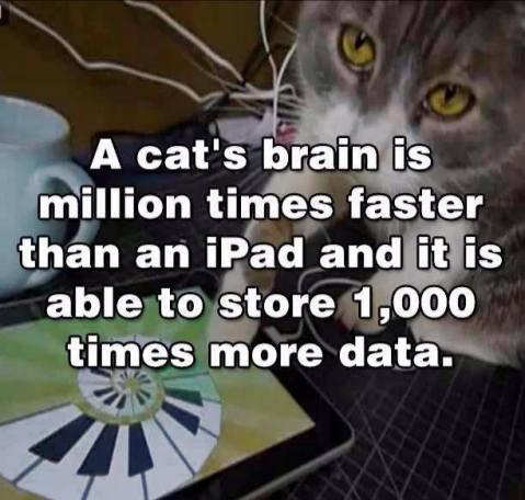 catsbrain