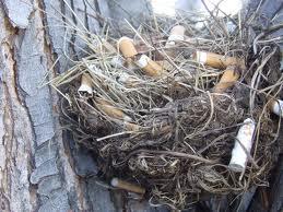cigarrete nests