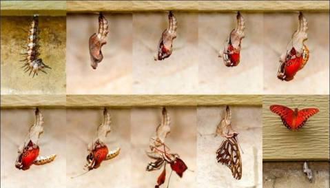 development butterfly