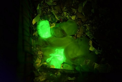 glow in the dark rabbits