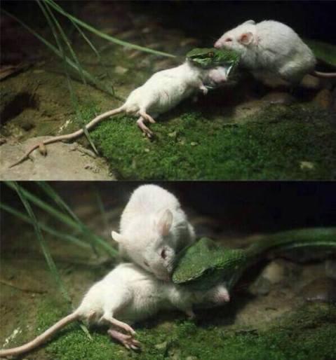mousesavinglife