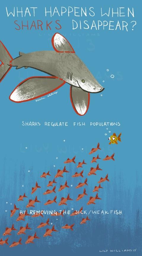 Shark_deviinfo03_lw