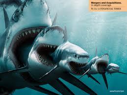 sharkscannibalism