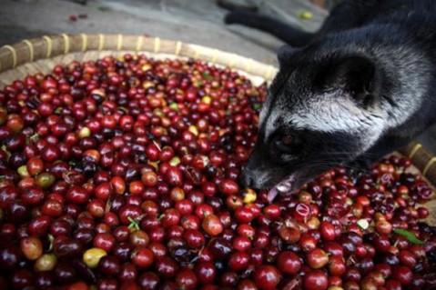 sn-coffeeberries_0