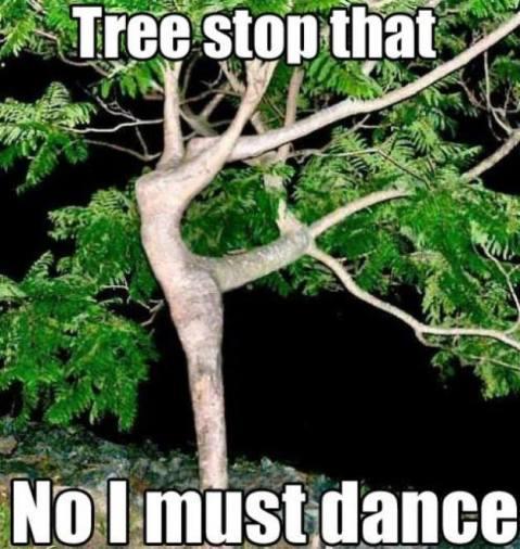 tree stop that