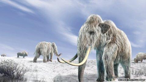 _69766211_mammoth-spl