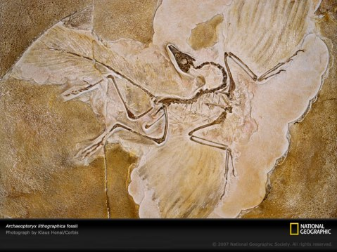 archaeopteryx-lithographica-ls001403-sw