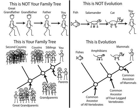evolution and family tree
