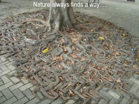 naturefindsaway