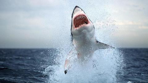 tiburonn--644x362