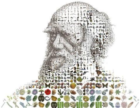 darwin time mag
