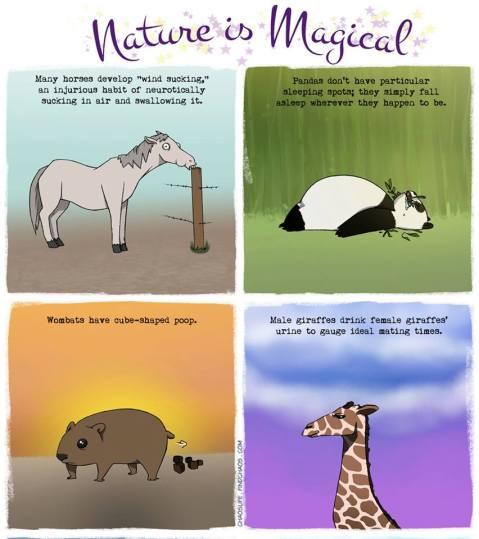 natureismagic